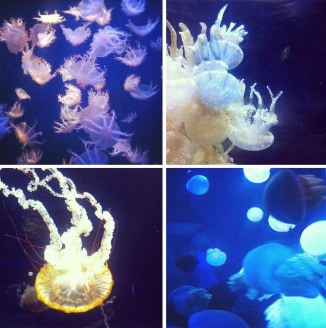 Enoshima jellies!